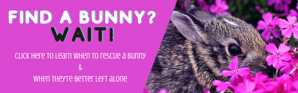 Bunny Help